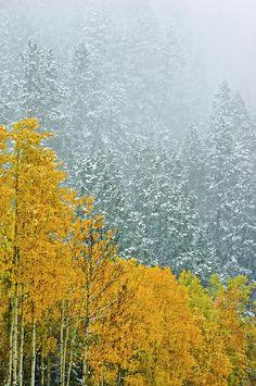 Canada, Alberta, Banff National Park Photograph by Jaynes Gallery