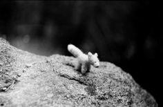 Líša 🐕🌲 fox somewhere lost 🌲🌲🌲 Fox, Foxes