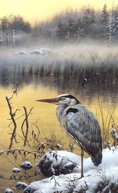 View Late snow - Great blue heron by Carl Brenders on artnet. Browse upcoming and past auction lots by Carl Brenders. Wildlife Paintings, Wildlife Art, Animal Paintings, Bird Paintings, Watercolor Bird, Watercolor Animals, Historia Natural, Bird Artwork, Blue Heron