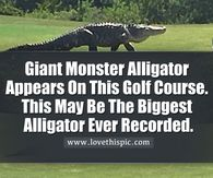 Giant Monster Alligator Appears On This Golf Course. This May Be The Biggest Alligator Ever Recorded. Giant Monster Alligator Appears On This Golf Course. This May Be The Biggest Alligator Ever Recorded. Good Morning Happy Monday, Good Morning My Love, Good Morning Picture, Kiss Pictures, Morning Pictures, Quote Pictures, Night Pictures, Saturday Greetings, Sunday Wishes