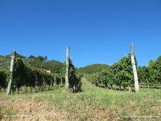 Weingut bei Lucca mit Ferienwohnungen und Pool www.traumtoskana.com