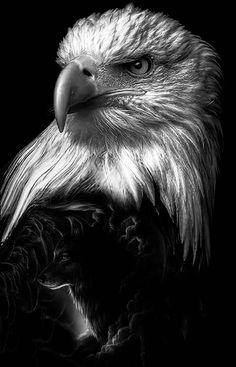 tattoo eagle - tattoo eagle - tattoo eagle arm - tattoo eagle small - tattoo eagle back - tattoo eagle old school - tattoo eagle feminine - tattoo eagle geometric - tattoo eagle chest Bald Eagle Tattoos, Eagle Head Tattoo, Eagle Images, Eagle Pictures, Beautiful Birds, Animals Beautiful, Beautiful Pictures, Geometric Tattoo Eagle, Regard Animal
