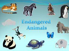 Endangered Animals Webquest