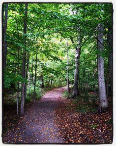 Where the trail goes #KnoxFarm #EastAurora #wny #autumn