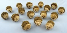 Just discovered some Burr Oak acorns today and in searching for their identity found these cute hedgehogs made with them. From Houseful of Hedgehogs.  Adorable.
