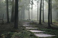 Forestales, Camino, Naturaleza