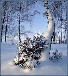 More white art! I Love Snow, Winter Love, Winter Is Here, Winter White, Winter Scenery, Winter Trees, Beautiful Winter Scenes, Winter Songs, Winter Magic