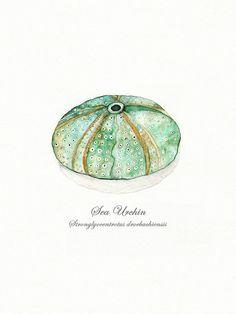 Sea Urchin/ watercolor print/teal/light green/aqua/tan/sea/ocean life/ Archival Print on Etsy, $20.00