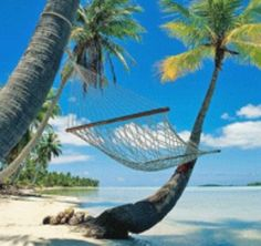 Spending Vacation or Celebrating the Holidays in The Seychelles Islands
