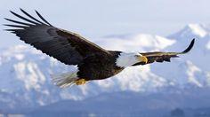 Donde Viven Las Aguilas2