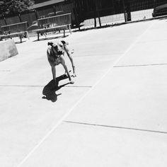 Main Street Garden Dog Park - Dallas, TX - Angus Off-Leash #dogs #puppies #cutedogs #dogparks #dallas #texas #angusoffleash Dog Park, Dallas Texas, Getting Out, Main Street, Cute Dogs, Parks, Maine, Puppies, Garden