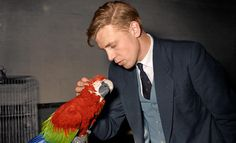 A young Sir David Attenborough pets a green-winged macaw 1950s. More