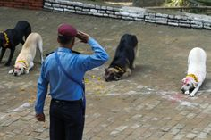 Nov. 2, 2013. A Nepalese police officer salutes dogs after worshiping them at Nepal's Central Police Dog Training School as part of the Diwali festival also known as Tihar Festival, in Kathmandu, Nepal.
