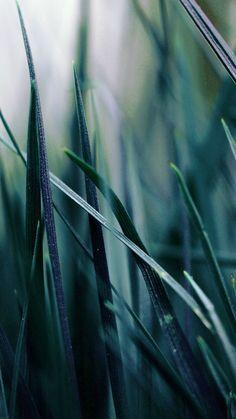 Nature Blue Grass Leaf Bokeh Garden #iPhone #6 #plus #wallpaper