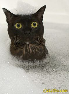 I love my black kitty!!! This is just cute.
