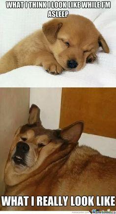 Puppy Meme Funny Sleep Memes Funny Memea Dating Memes Funny Funny Puppy Memes