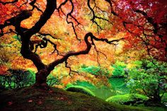 WOW! Colorful tree!