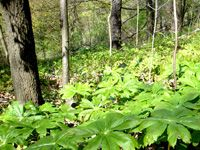 Crothers Woods - An environmentally significant area designated by the Toronto & Region Conservation Authority