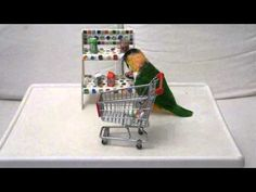 Kili Senegal Parrot - Pushing Baby in Stroller Trick (As Seen On Late Show With David Letterman) - YouTube
