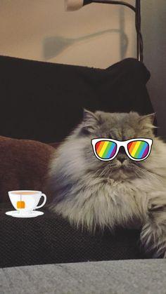 May I have a cup I tea?