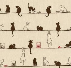 Cats, cats and cats!