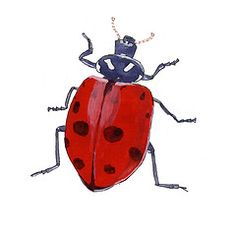 drawings of insects   ) Tags: 2005 color animal ink bug watercolor painting insect drawing ...