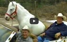 Patches the Horse is quite the amazing pet! He can do ANYTHING! #horses #pets
