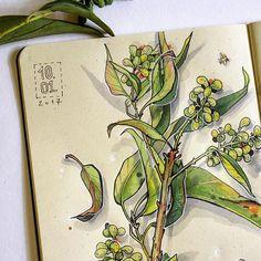 Um pedacinho do meu desenho       Кусочек ботаники.  🍀🍀🍀  #sketch #art #sketchbook #desenho #botanica #botanic #illustration #drawing #graphic #flora #natureza #brasil #copic #copicbrasil #copicmarkers #fabercastell #instaart #vscobrasil #vscocam #topcreator #art_we_inspire #plusdrawing #desenhotudo #eunadraw #painting #_tebo_ #plantas #flowers #travel #рисуйкаждыйдень