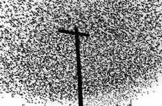 Graciela Iturbide  Birds on the Pole, Guanajuato, Mexico 1990 on view at Tate Modern until 3 November 2013