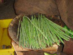 EcoPort Picture : Moringa oleifera, Ayurveda, Unani