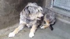 A forgotten little dog is too afraid to even approach the front of her kennel has been sentenced to death. Time is of the essence to save her.