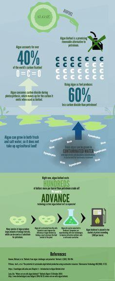 BIOENERGIZEME INFOGRAPHIC CHALLENGE: Algae Biofuel