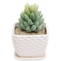Contemporary White Ceramic Succulent Planter Flower Pot w/ Decorative... ($9.99) ❤ liked on Polyvore featuring home, outdoors, outdoor decor, white ceramic flower pot, white ceramic plant pots, white planter, garden decor and white ceramic planter