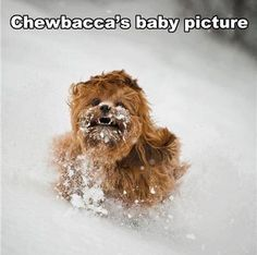 Chewbaccas Baby Picture!