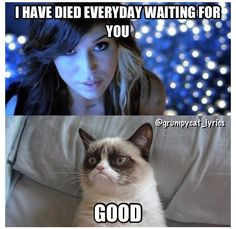 Grumpy Cat sings A Thousand Years by Christina Perry