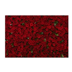 ·Beautiful Red Roses...· #love#redroses#photo#me#passions#follow4like#beautifull#cute#styles#faschionblogger#migliaia#floweroftheday#fashion#girl#like4like#goodlife#delicius#happiness#fantasy#swag#smilee#looks#beautifulday# lookoftheday#picoftheday#dailypic#mondaynight#cute#girls#romantico#regaliinaspettati#instalove