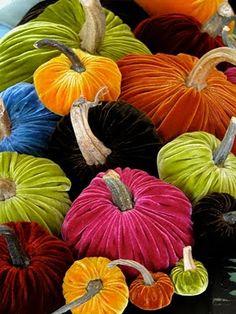 velvet pumpkins....wow!