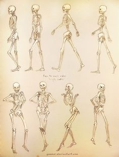 * Real people in motion and their internal skeletons so Yuumei drew the top 4 in a walk cycle and the bottom 4 dancing to Beyonce's Single Ladies - Yuumei (Wenqing Yan)