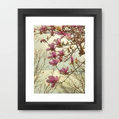 Spring Botanical Chinese Magnolia, Magnolia × soulangeana tree in flower Framed Art Print by V. Sanderson / Chickens in the Trees - $42.00