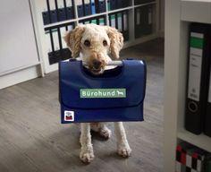 Für Bürohunde - ERNL – Hundtasche