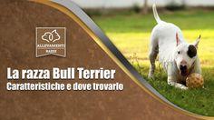 Il Bull Terrier oltre la macchia...