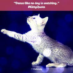 #KittyQuote: Dance like no dog is watching.  Happy International Dance Day! 💃💃 #Dance #DanceDay #cat #cute #cats #InternationalDanceDay #quote #fun #SocialMedia #SocialMediaTool #SocialMediaCalendar