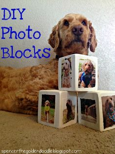 Spencer the Goldendoodle: DIY Photo Blocks