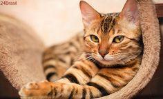 No mês dos rins, campanha chama atenção para o cuidado com a saúde dos gatos