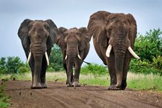 Cruel' elephant rides gaining popularity in southern Africa likely ...