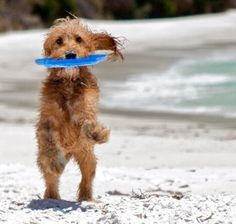 Beach Grass, Seaside, Teddy Bear, Dogs, Animals, Dreams, Animales, Animaux, Beach