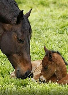 IT'S A GIRL! Australian turf racing queen ‪‎BLACK CAVIAR‬ and her baby filly by EXCEED AND EXCEL.