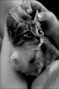 watching cutie