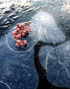 Joulukuu -inspiraatiota luonnosta @asuntomessublogit Red
