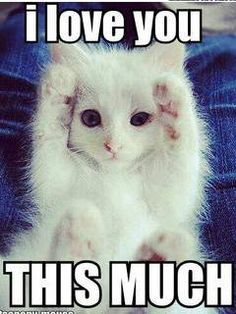 cute kitty - ily this much